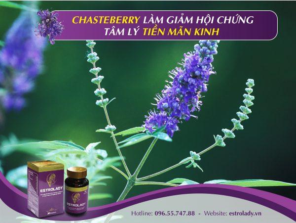 Chasteberry làm giảm hội chứng tâm lý tiền mãn kinh