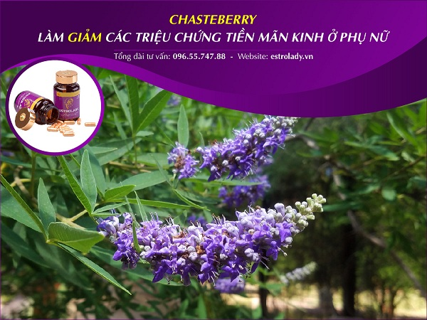 cong dụng của chasteberry